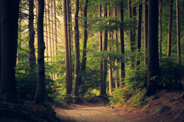ESG is a 'Critical Requirement' in Fiduciary Duty, Says UNEP FI